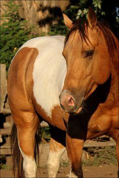 such a pretty horse