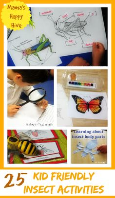 A collection of kid friendly insect activities with of life cycles, free printables, specific activities for grasshoppers, butterflies, ladybugs, honey bees, and ants! - www.mamashappyhive.com