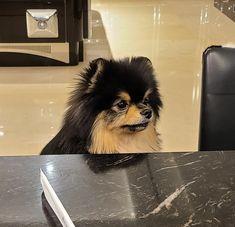 V Taehyung, Bts Jungkook, Bts Dogs, Animals And Pets, Cute Animals, Park Ji Min, Bts Photo, Foto Bts, Kpop