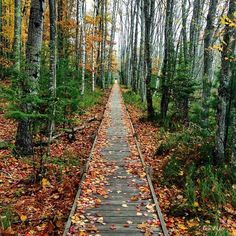 #AcadiaNationalPark never ceases to amaze. It's as if it will forever be more #beautiful in its current season than it was in the last. Photo by @piper0320 #Fall in #Maine #Acadia #NationalParks #AcadiaNP #BarHarbor  Read Maine's outdoor recreation & lifestyle magazine at www.CampfireMagazine.com