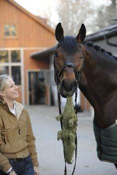 Augustin, un caballo de carreras, no va a ningún lado sin su peluche-cocodrilo. Sabíamos que los caballos eran TAN tiernos?