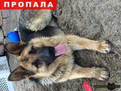 Пропала собака потерялась немецкая овчарка г.Красноярск http://poiskzoo.ru/board/read31422.html  POISKZOO.RU/31422 Пожалуйста помогите в д Бугачево (ближе к ж/д) .. сентября пропала немецкая овчарка( сука .. год), может кто знает где в данный момент собака или у ваших соседей появилась такая собака ( возраст окрас)сообщите пожалуйста конфиденциальность гарантирую в долгу не останемся ( подарю равноценного щенка или деньги)! Возможно находится уже примерно ул Норильская, Колягино, СНТ…
