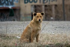 The plight of Detroit's economy is a familiar sight in the news – bankruptcy, unemployment, struggling industries and homelessness are topics that are covered frequently. But, perhaps an often overlooked aspect of the city's economic crisis are the feral dogs.