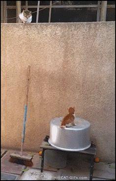 Funny cats - part 224 (40 pics + 10 gifs)