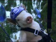 MAXWELL THE PIG...MY FAVORITE COMMERCIAL