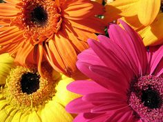 Gerbera Daisies. Reminds me of my wedding bouquet...