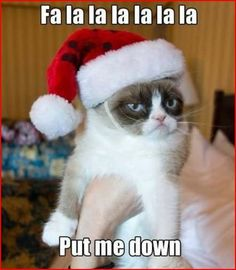 Grumpy Cat | Chime.in