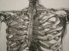 skeleton drawing by nou chee; fall 2008, via Flickr.