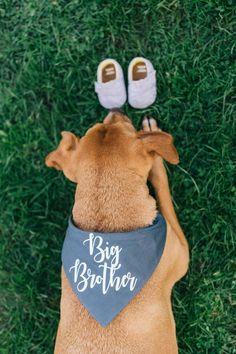 Big Brother Bandana, Dog Pregnancy Announcement Bandana, Big Brother Dog Bandana, Big Sister Bandana, Big Sister Pregnancy Announcement Band - Our baby - Schwanger Pregnancy Announcement Photos, Pregnancy Tips, Baby Announcement Dog, Early Pregnancy, Pregnancy Reveal Photos, Pregnancy Acne, Cute Baby Announcements, Pregnancy Dress, Pregnancy Clothes