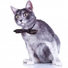 curious cat in a bow tie