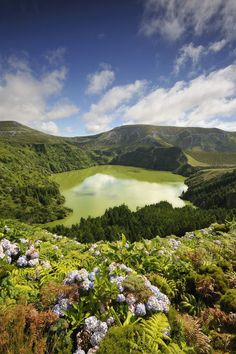 Poster Print-Crater lake with hydrangeas in the foreground, Caldeira Funda. Azores islands, Poster sized print made in the USA Island Map, Island Beach, Portugal, San Miguel Azores, Terceira Azores, Places Around The World, Around The Worlds, Crater Lake, Out To Sea