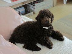 Monty at 6 months