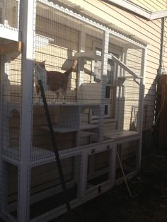 Connected to the house by window; outdoor cat sanctuary, house, and perch for cats of all ages