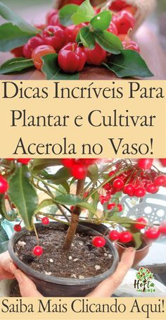 Acerola, Fruit Trees, Vegetable Garden, Container Gardening, Bonsai, Diy And Crafts, Organic, Vegetables, Rose