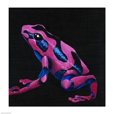 the purple poison arrow frog