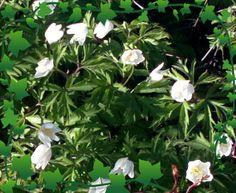 KKK Flowers, Plants, Flora, Royal Icing Flowers, Floral, Plant, Florals, Flower, Bloemen