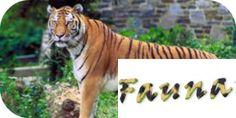 Este es el Tigre de Vengala .uno de los más característicos de Asia