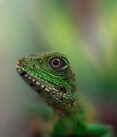 Lizard by ~PenguinPhotography on deviantART
