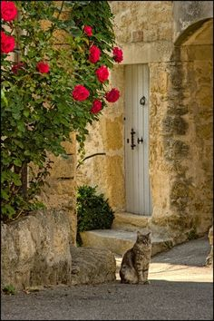 Cat in Provence,France.