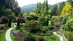 Butchart Gardens in Victoria, BC Sunken Garden, Places Ive Been, Trip Advisor, Golf Courses, Places To Visit, Gardens, Victoria, Flowers, Canada