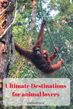 The Ultimate destinations for animal lovers!   www.yokomeshi.co.uk