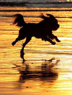 Ocean Beach, San Diego - Dog Beach, via Flickr.