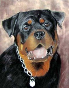 Storm, a Rottweiler by Katherine Taylor-Green on ARTwanted