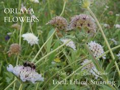 Orlaya Flowers. Local. Ethical. Stunning.   http://www.orlayaflowers.com/#!our-flowers/tuury