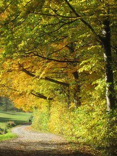 Jogging Trail (Heidelstein)... Wasserkuppe (Rhön), Germany...