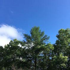 【richa_pyon2】さんのInstagramの写真をピンしています。《爽やか〜。お日様出ても暑くなくて、空気はひんやり。快適すぎる〜*\(^o^)/* (帰るの怖い)》