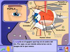 El ojo - los sentidos, juegos educativos interactivos. Recursos para Primaria.