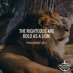 The righteous are bold as a lion. Proverbs 28:1