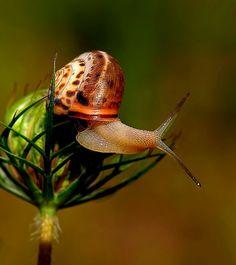 snail                                                                                                                                                                                 More