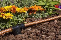 Drip Irrigation Conversion Kit #ArkLabs