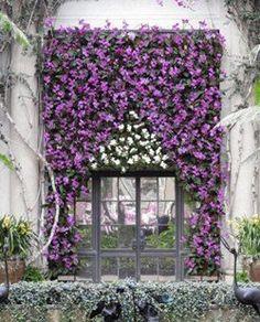 Winter Plants: Top Flowering Plants, Shrubs & More for Winter Color - Garden Design Orchids Garden, Garden Shrubs, Shade Garden, Moss Garden, Potager Garden, Flowers Garden, Garden Plants, Tropical Landscaping, Modern Landscaping