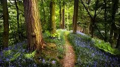 Beautiful Spring Forest Wallpaper by Naomi Mor on FeelGrafix Frühling Wallpaper, Spring Wallpaper, Forest Wallpaper, Free Desktop Wallpaper, Desktop Backgrounds, Hd Desktop, Wallpapers, Peak District, English Bluebells