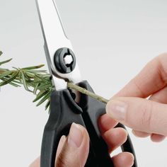 All-purpose OXO Good Grips kitchen scissors. Features herb stripper for removing herbs from stems. Kitchen Twine, Kitchen Herbs, Kitchen Utensils, Kitchen Gadgets, Kitchen Stuff, Kitchen Tools, Kitchen Must Haves, Home Tools, Kitchen Drawers