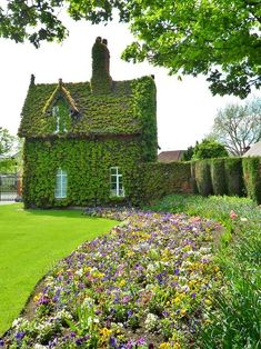 Green Boston Ivy Covered Cottage, Dartmouth Park, Sandwell, England