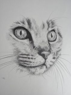 'BRIGHT EYES' - A DRAWING OF A CATS HEAD IN CLOSE UP