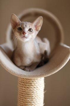 綺麗に撮って欲しいニャ/猫 ネコ cats (ネスレ日本)
