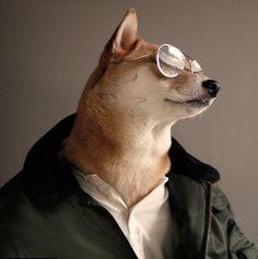 PsBattle: Shiba Inu wearing a white shirt a black jacket and sunglasses