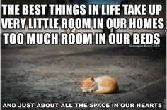 All Pet Hospital. Simple Tips To Help You With Cat Care. When cats aren't sleeping, they have to do something to pass the time. If left unchecked, cats tend to climb on furniture and scratch your belongings. Animals And Pets, Funny Animals, Cute Animals, Animal Funnies, Cat Quotes, Animal Quotes, Funny Quotes, Crazy Cat Lady, Crazy Cats