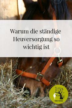 Warum die ständige Heuversorgung für Pferde so wichtig ist!