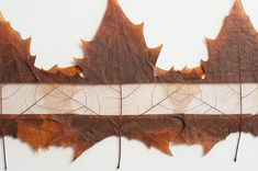 Top 6 Incredible Artworks Made From Autumn Leaves! Lorenzo Duran's leaf art – Inhabitat - Sustainable Design Innovation, Eco Architecture, Green Building