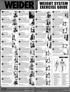 weider home gym exercise chart weight machine workouts pinterest rh pinterest com Weider 8530 Home Gym System Weider Pro 4850 Home Gym