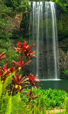 Queensland Aussie -- would love to see the gold coast and snorkel the great barrier reef Beautiful Waterfalls, Beautiful Landscapes, Queensland Australien, Beautiful World, Beautiful Places, Beautiful Boys, Places To Travel, Places To See, Romantic Vacations