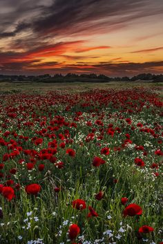 "gyclli: ""   Spring landscape for Kos island Greece!! Red… Spring world / George Papapostolou    """