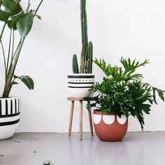 Pop and Scott pots are standard issue for anyone looking to polish up their indoor and outdoor pot plants. Great patterns lightweight hand-painted in great hues.... We feel a long pinterest session coming on - this shot is so dreamy! Imagine all the great things you could pair with this!  Pick up these pots plus more patterns as well as concrete @ontheside_ pots at #koskela (Middle pattern pictured not available). Photo via @popandscott by koskela_