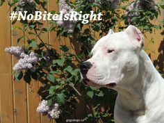 Help Protect Your Pet From Fleas & Ticks - #NoBiteIsRight #sponsored #Canada