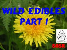 School of Self Reliance presents a few wild edible plants that can be found in the early springtime. Part 2 will be filmed and posted in the summer. We are r...
